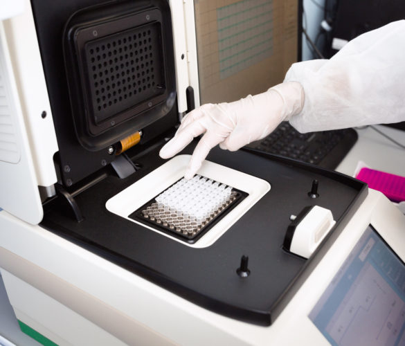 Female genetics worker placing the strips with DNA into the PCR thermal cycler or amplifier for PCR diagnostics